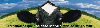 TÊNIS PLATAFORMA ROSE